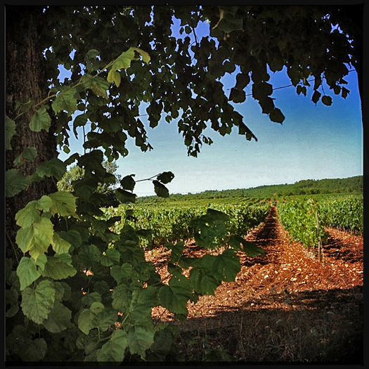Clos Siguier Cahors, Gilles Bley, Sud-ovest